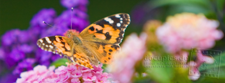 Schmetterling © docupics.de